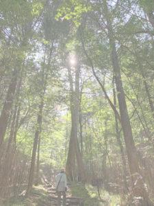段戸湖原生林散策(きららの森)