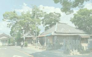 観音寺の大楠