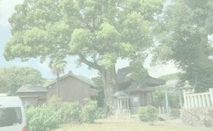 関川神社の楠