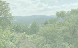文殊山城跡のブナ