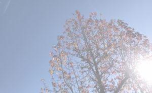 豊田自然観察の森(三角点・市木)