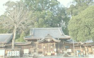 尾鷲神社の大楠
